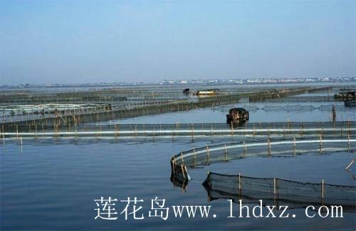 阳澄湖围网区62