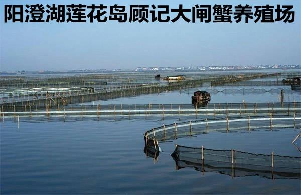 阳澄湖大闸蟹养殖场