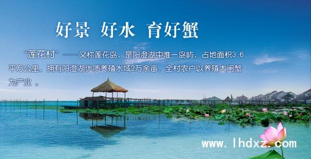 阳澄湖莲花村48